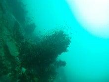 海南潜水 hainandivingのブログ-フィリピン7-10