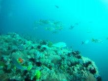 海南潜水 hainandivingのブログ-フィリピン6-6