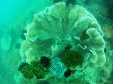 海南潜水 hainandivingのブログ-フィリピン7-16