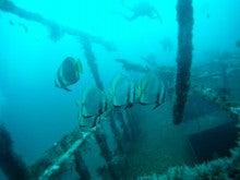 海南潜水 hainandivingのブログ-フィリピン7-9