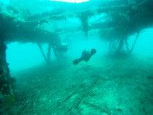 海南潜水 hainandivingのブログ-フィリピン6-9