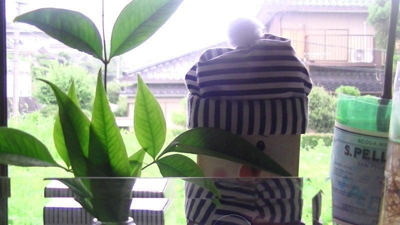 おまけ道@琵琶湖畔で実家生活♪ポテチンっ♪-20130731wed