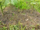 炭素循環農法と自然農法組み合わせてやりたいな~~-DSC_0378.JPG