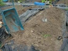 耕作放棄地を剣先スコップで畑に開拓!有機肥料を使い農薬無しで野菜を栽培する週2日の農作業記録 byウッチー-130729とうもろこし残渣を埋込み白菜の土作り04