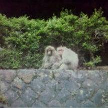 猿・猿・猿!!