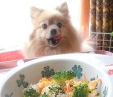 $【大阪・神戸】ペットに手作り食倶楽部 ★ 阪神間でペット食育講座-2号1