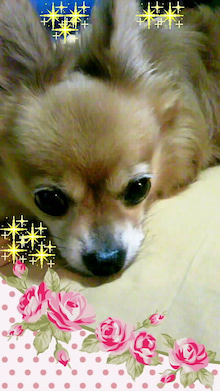 公式:黒澤ひかりのキラキラ日記~Magic kiss Lovers only~-ML_TS3Y2458000100020001.jpg