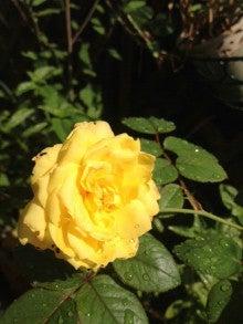 望月理恵オフィシャルブログ「mochiee's garden」Powered by Ameba-___ed.jpg