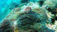 海南潜水 hainandivingのブログ-AOW5