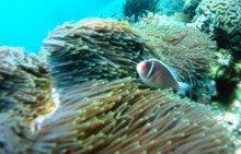 海南潜水 hainandivingのブログ-AOW6