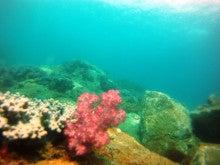 海南潜水 hainandivingのブログ-AOW29