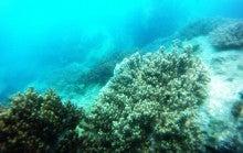 海南潜水 hainandivingのブログ-AOW20