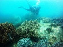 海南潜水 hainandivingのブログ-AOW19