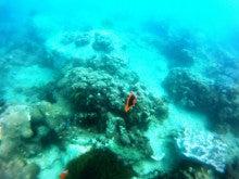 海南潜水 hainandivingのブログ-AOW18