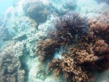 海南潜水 hainandivingのブログ-AOW24