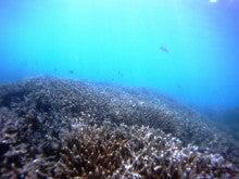 海南潜水 hainandivingのブログ-AOW25