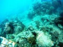 海南潜水 hainandivingのブログ-AOW10