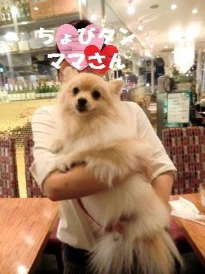 ポメラニアン☆ミルクの育犬日記☆