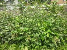 炭素循環農法と自然農法組み合わせてやりたいな~~-DSC_0399.JPG