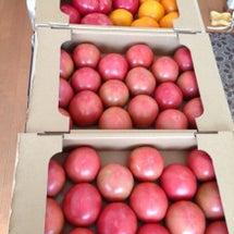 朝トマト今季ファイナ…