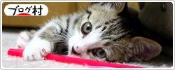 野良猫をプロデュース-日本ブログ村野良猫ランキングボタン