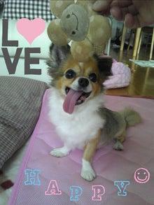 Happy Paws預かり日記-1376099690709.jpg