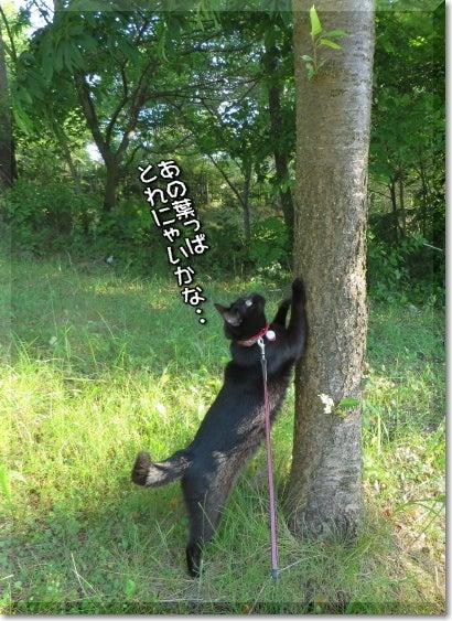 柴犬コタロウの徒然川柳 こたせん-あれとれないかにゃ