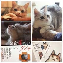 猫本『余命4ヶ月のダ…