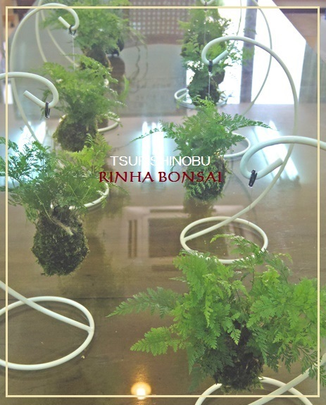 bonsai life      -盆栽のある暮らし- 東京の盆栽教室 琳葉(りんは)盆栽 RINHA BONSAI-琳葉盆栽 ツリシノブ