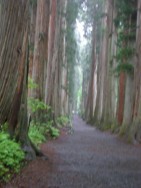 夫婦世界旅行-妻編-杉並木
