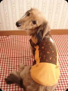 ☆犬服ハンドメイド☆ Mダックスちっち&るるのお洒落な毎日