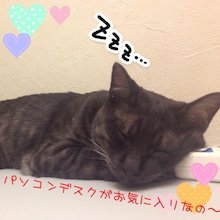 shima&choroの兄弟節だにゃ~♪-IMG_8000.jpg