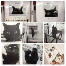 黒猫、クロネコ、くろ…