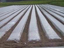 味のる農園のブログ
