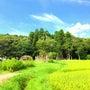 千葉で夏の日