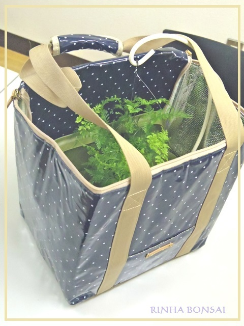 bonsai life      -盆栽のある暮らし- 東京の盆栽教室 琳葉(りんは)盆栽 RINHA BONSAI