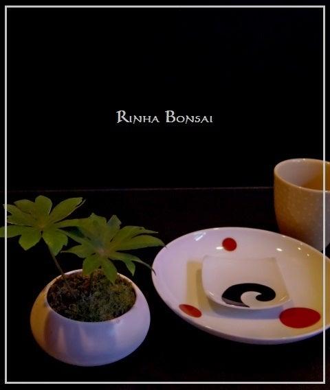 bonsai life      -盆栽のある暮らし- 東京の盆栽教室 琳葉(りんは)盆栽 RINHA BONSAI-琳葉盆栽 ヤブレガサ