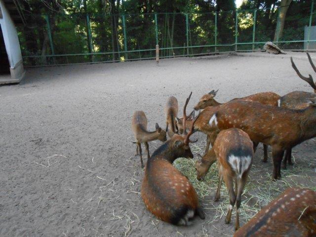 kagiのブログ-香取神宮