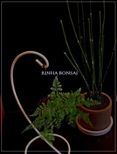 bonsai life      -盆栽のある暮らし- 東京の盆栽教室 琳葉(りんは)盆栽 RINHA BONSAI-琳葉盆栽 新築祝い