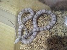 蛟家ブログ 蛇の道は蛇-130812_010421.jpg