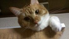 $らいとんの猫ろぶろぐ-猫