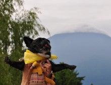 フレンチブルドッグのサクラちゃん-富士山
