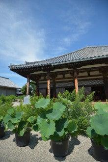 奈良 ドレスショップ☆アトリエステディ ブライダルコーディネーターのブログ-元興寺 蓮の花