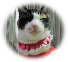 三毛猫天使なでしこ*こえりとセーラの呟き