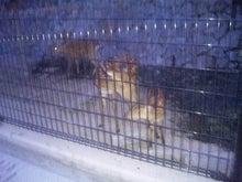 鹿児島お住まい日報-yoru_Zoo1