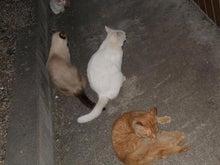 FF11&猫&CG&双極性障害闘病日記