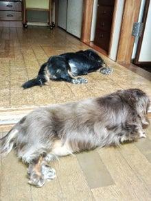 犬太郎が来た!-IMG_20130829_195359.jpg