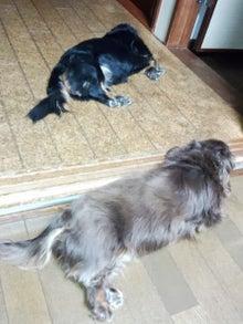 犬太郎が来た!-IMG_20130829_195343.jpg