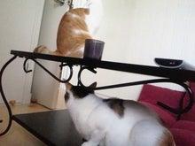 PFL★MIKIのブログ-2013082909190000.jpg
