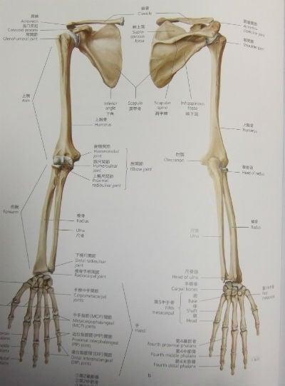 「上肢部位 名称」の画像検索結果